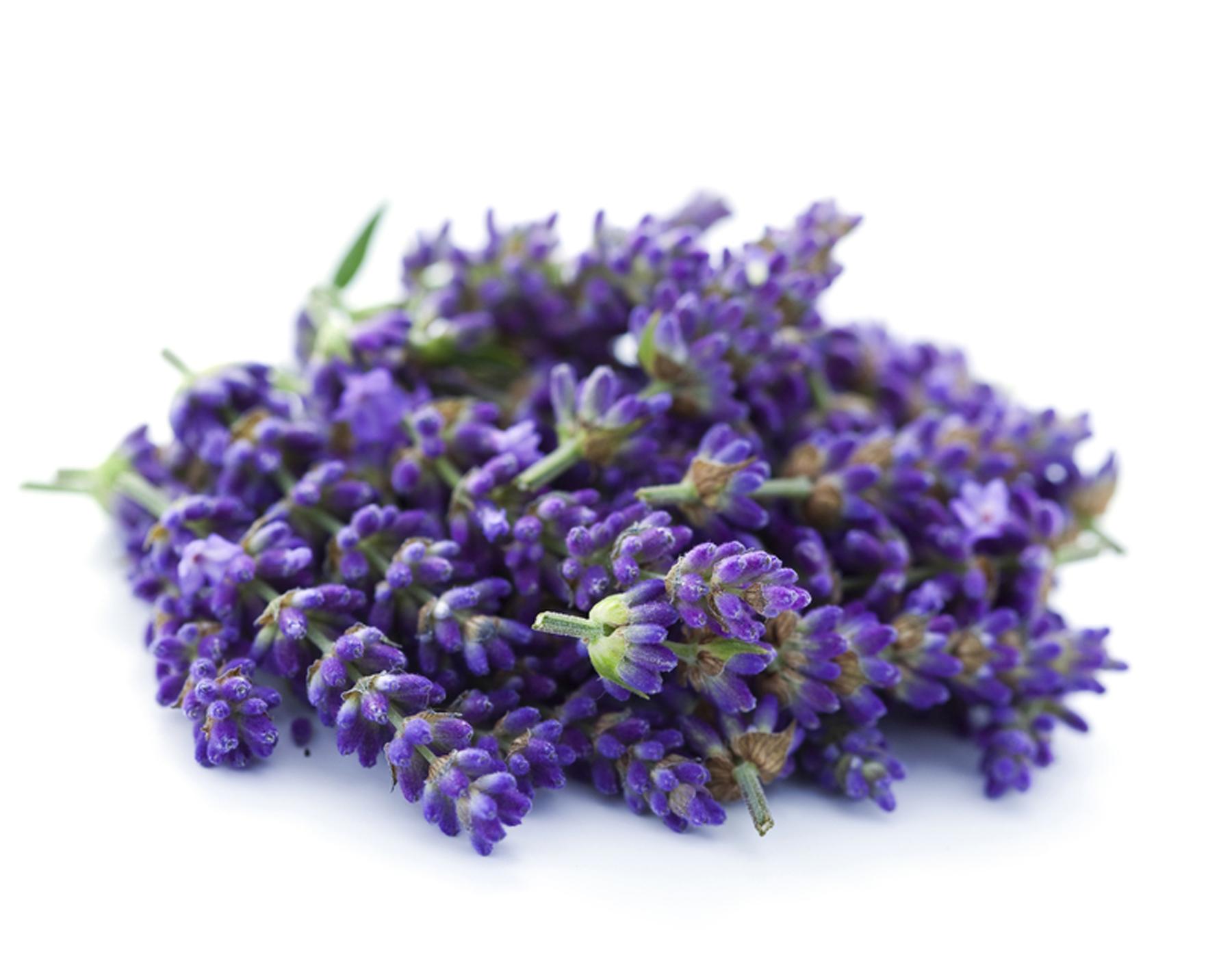 Resultado de imagen de lavender dry free image